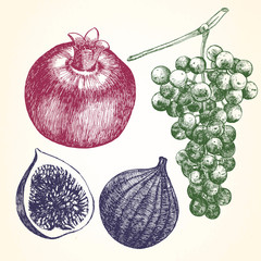 Hand drawn set of Fruits with Pomegranate, Figs and Grapes.  Vector.