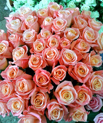 Peach roses, a bouquet of flowers