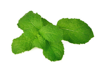 fresh mint leaves on a white background