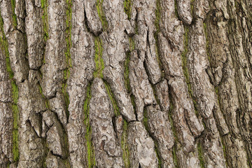 The texture of a thick tree bark