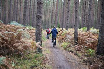 Radfahrer im Darßwald