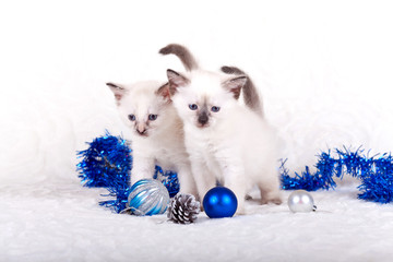 Siamese kittens with Christmas balls