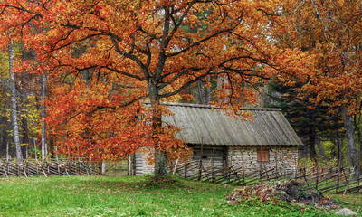 vintage, rustic house in the autumn forest. The open air Museum in Tallinn. The sights and history of Estonia. Rural landscape. Estonia. Autumn.