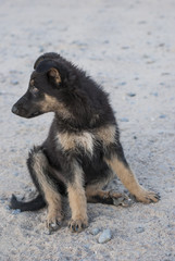 beautiful stray dog on the sand in the morning