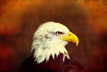 Profile of a bald eagle on grunge background.
