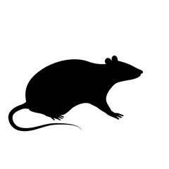 Silhouette of the rat or mouse is sitting on a white background