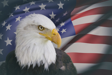 a beautiful bald eagle with a background of a usa flag