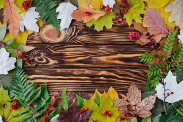 Autumn composition of colorful leaves and berries on wooden background. Top view, flat lay, copy space. Thanksgiving day concept.