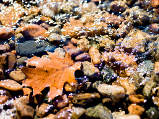 Leaf and Rocks