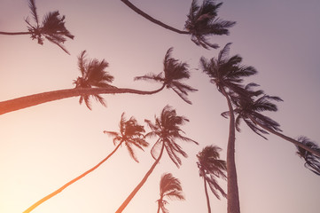 silhouettes of palm trees on sunset. vintage picture