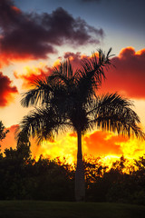 Palm tree on the background of a beautiful sunset