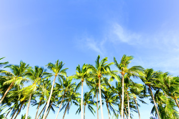 Palm trees against a blue sky