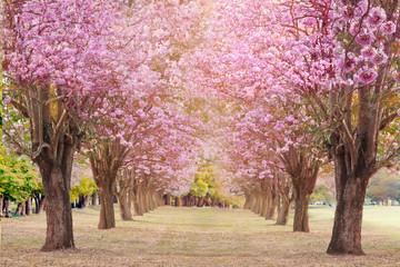 Pink trumpet tree landscape.