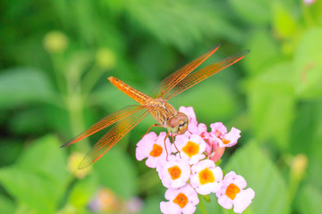 Dragonfly on flower.