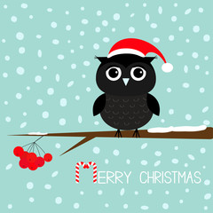 Black owl in Santa Claus hat. Cute cartoon character sitting on rowan rowanberry sorb berry tree branch. Snow flake blue background. Merry Christmas Candy cane text. Greeting card. Flat design.