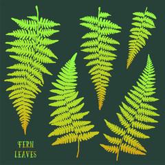 Fresh green hand drawn fern leaves isolated on dark background.