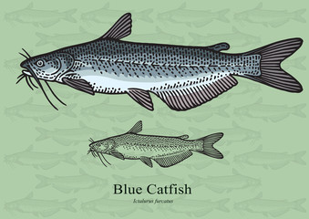 Blue Catfish. Vector illustration for artwork in small sizes. Suitable for graphic and packaging design, educational examples, web, etc.