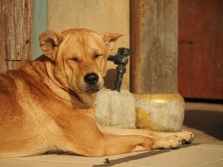 Dog Sleeping On The Sun