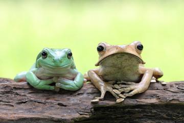 Dumpy frog and eared frog