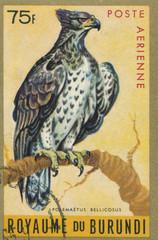 BURUNDI - CIRCA 1970: stamp printed by Burundi, showing Martial Eagle (Polemaetus bellicosus), circa 1970