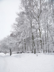 Snow-covered trees in the city park.