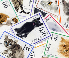 Feline composition made of postage stamps