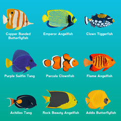 Tropical fish collection vector illustration
