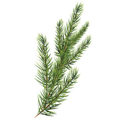 Spruce branches. Christmas tree branch. Vector Vector