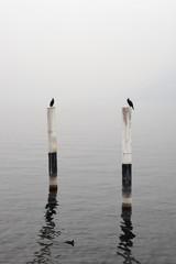 Minimalistic foggy landscape  of Como lake with poles and two cormorants
