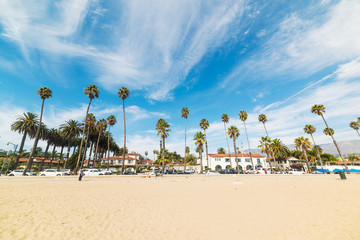 Palm trees by the shore in Santa Barbara