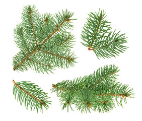 Pine tree isolated on white. without shadow