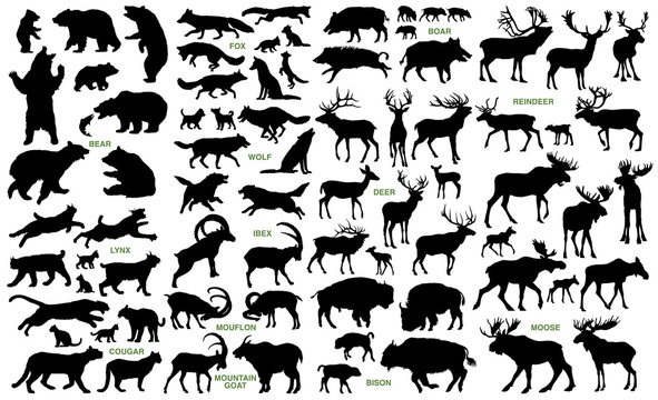 Big mammals of the northern lands vector silhouettes collection
