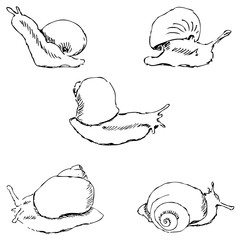 Snails. Pencil sketch by hand