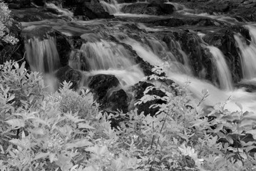 Blurred waterfall behind foliage