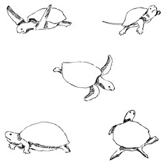 Turtles. Pencil sketch by hand