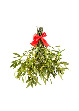 Broom from green mistletoe