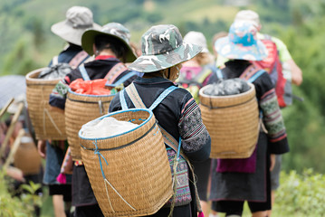 SAPA - SEP 21 :  Vietnamese Hmong  are go back from working on september 21, 2016 at sapa district,northwest of Vietnam.