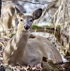 Beautiful isolated photo of a wild deer in the forest