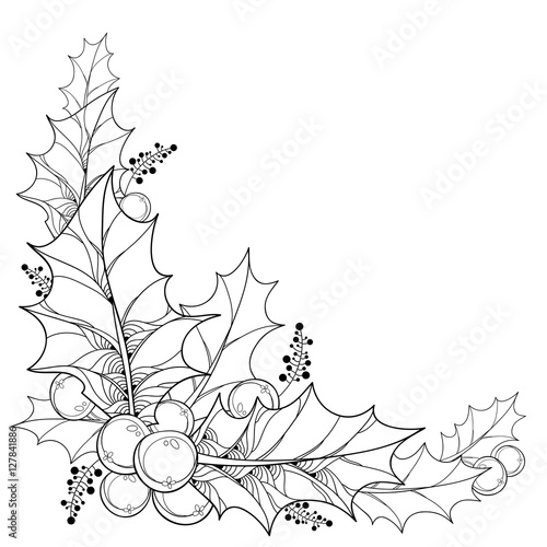 quotvector twig with outline leaves and berries of ilex or