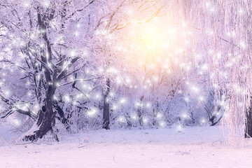 Rising sun shines on white snowflakes