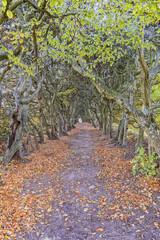 Palsjo Tree Tunnel