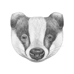 Portrait of Badger. Hand-drawn illustration.