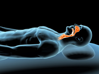 Reclining Man with X-ray Nose and Throat Highlight
