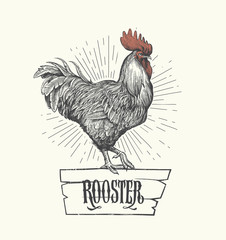 Rooster in graphic style, hand drawn illustration. Symbol of 2017. Vector