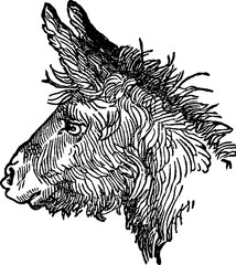 Vintage picture donkey