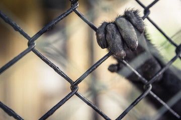 Exotic animals in captivity concept
