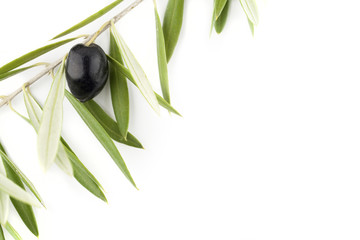 Black olive in its branch on background with copy space for your text.