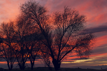 beautiful sunset and trees