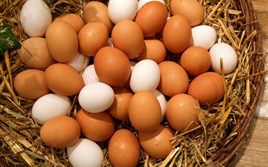 wicker basket with lots of fresh chicken eggs just collected in