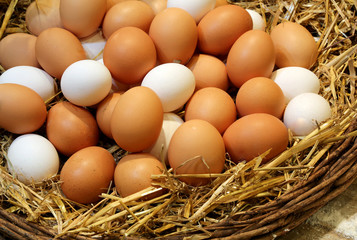 chicken eggs just collected in the henhouse